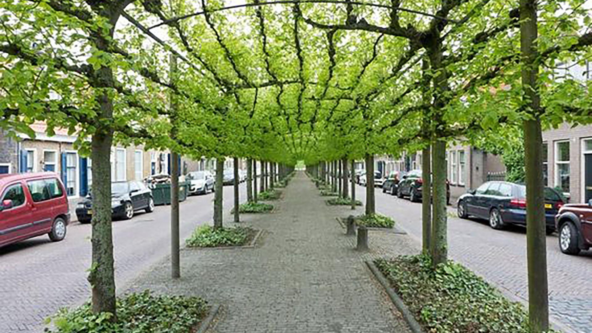 05 - Bulevar en Willemstad, Holanda